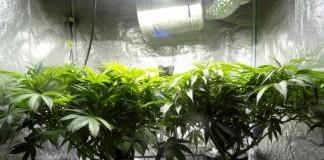 Doniczki z roślinami